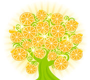 tree with slices of oranges. Royalty Free Stock Photo