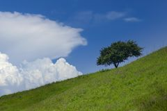 Tree on slope. Alone tree on the meadow slope Stock Image