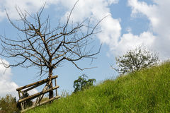 Tree on a slope Royalty Free Stock Photography