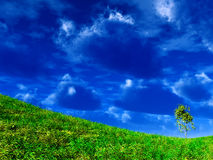 Tree on the slope of mountain Stock Image