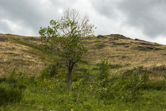 Tree on a slope Royalty Free Stock Image