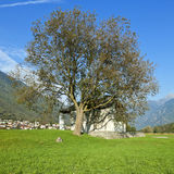 Tree and small church Royalty Free Stock Photos