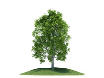 Tree with small gras hill Royalty Free Stock Image