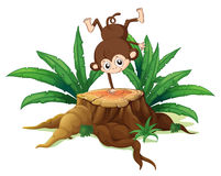 A tree with a small playful monkey Stock Images
