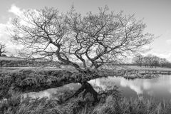 Tree by small pond Royalty Free Stock Photo