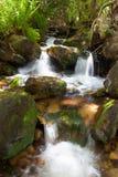 Tree small waterfalls Royalty Free Stock Image