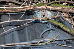 The tree smashed the car`s windshield. With a large, close-up hole Royalty Free Stock Photos