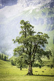 Tree with smoke in alps Stock Photography