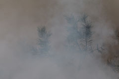 Tree in a smoke looking like dense fog Stock Images