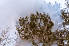 Tree in a smoke looking like dense fog Royalty Free Stock Images