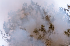 Tree in a smoke looking like dense fog Stock Image