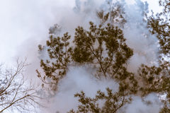 Tree in a smoke looking like dense fog Stock Photography