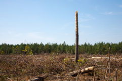 Tree snag and forest clear cut Stock Images