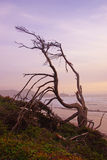 Tree snag silhouette at sunset Royalty Free Stock Photo