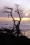 Tree snag silhouette at sunset Royalty Free Stock Photos
