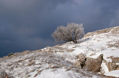 Tree in snow. Against the sky Stock Image