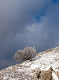 Tree in snow. Against the sky Stock Photo
