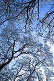 Tree with snow Royalty Free Stock Photos