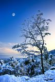 Tree in a snow Stock Images