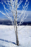 Tree in the snow. World of ice and snow Stock Photos
