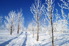 Tree in the snow. World of ice and snow Royalty Free Stock Image