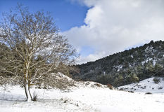 Tree in the Snow. Snowy mountain landscape with a tree in the left of the image Stock Photography