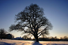 Tree in the snow. A Tree in the snow late afternoon Stock Image