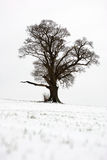 Tree in the snow Stock Photo