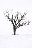 Tree in the snow Royalty Free Stock Photo