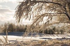 Tree with snow Stock Photo