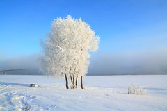 Tree in snow Royalty Free Stock Photos