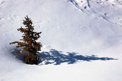 Tree Snow Stock Photo
