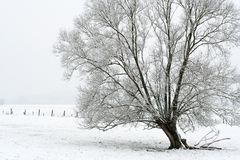 Tree with snow. This picture was taken in France Royalty Free Stock Photography