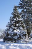 Tree in the snow Stock Photography