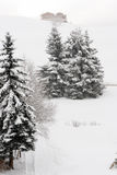 Tree with snow Stock Image