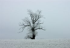 Tree with snow Stock Images