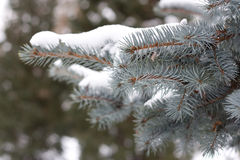 Tree and snow. In central park, close-up Royalty Free Stock Photo