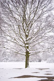 Tree in the Snow. A large tree in the centre of the frame with bare winter branches covered in thick snow stock photo
