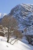 Tree and snow Stock Image