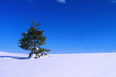 Tree in a snow Stock Photography