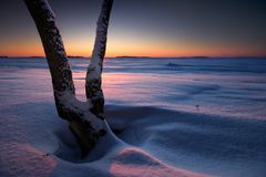 Tree in snow on the beach Stock Photography