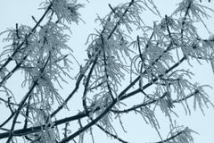 Tree in snow. Royalty Free Stock Photos