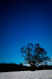 Tree in the Snow With Blue Sky Stock Photography