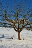 A tree in the snow with blue sky Royalty Free Stock Photo