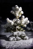Tree in the snow. Christmas tree in the snow Stock Photo