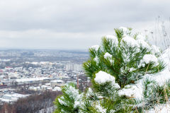 Tree in the snow on the city background, Lviv Royalty Free Stock Images