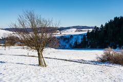 Tree on snow covered rural fields. Tree on snow covered agricultural fields. beautiful winter landscape of mountainous rural area Royalty Free Stock Images