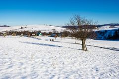 Tree on snow covered rural fields. Tree on snow covered agricultural fields. beautiful winter landscape of mountainous rural area Stock Photography