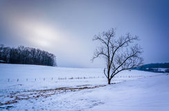 Tree on a snow covered farm field in rural York County, Pennsylv Royalty Free Stock Images