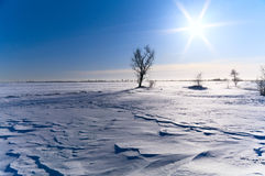 Tree in a snow-covered field. Lonely tree in a snow-covered field, the clear sky and the sun Royalty Free Stock Image